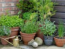 Za��t m�ete t�eba s p�stov�n�m bylinek v n�dob�ch, na balkon� �i za oknem.