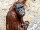 Samice Mawar se svým mládětem