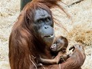 Samice Mawar s mládětem