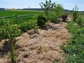 Takto vypad� �iv� plot v p��i permakulturn�ho zahradn�ka: plo�n� mul�ovan� jsou