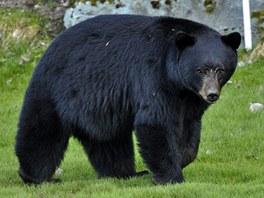 Medvěd, kterého jsem vyfotil, když se procházel na golfovém hřišti Nicklaus