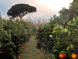 Pomerančovníky či citrusovníky jsou na Sardinii na každém kroku.