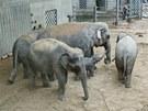 Nov� sloninec v pra�sk� zoo