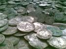 Muž z Boskovicka objevil džbán se stříbrným pokladem. Místo odevzdání nález
