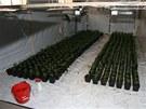 Připravovaná nelegální pěstírna marihuany. Policie ji odhalila ve skladových prostorech při činžovním domě.