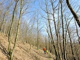 Cesta kolem vyhlídek vede hezkým dubovo-habrovým lesem.