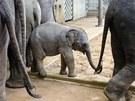 Sloní mládě Sita v novém pavilonu