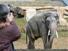 Otevření pavilonu Údolí slonů v pražské zoologické zahradě