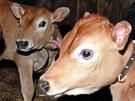 Nejen domácí zvířata a jejich mláďata jsou k vidění na statku Apolenka ve