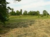 Slaná louka u Újezdce na Mělnicku je další přírodní památkou.