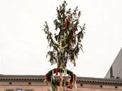 Májka bude dominantou brněnského náměstí Svobody do 7. května. Kandidáti na
