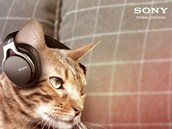 Sluchátka SONY pro kočky