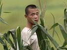 Severokorejský voják na kukuřičném poli nedaleko hranice s Čínou. (archivní