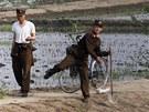 Severokorejští vojáci na poli u čínských hranic (archivní snímek z roku 2011)