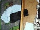 �ern� �t�n� uv�zlo hlavou v otvoru d�ev�n� postele a dusilo se. Museli ho