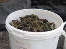 Celníci zabavili u Žamberka na Pardubicku 0,7 kilogramu marihuany v hodnotě 175
