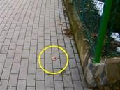 Podivn� n�vnada le�ela na chodn�ku v Bro��kov� ulici ve Fr�dku-M�stku. (11....