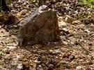 Uhořelé fenky kynologové pochovali do společného hrobu.