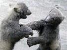 Medvědí hrátky.