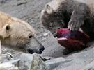 Medv�di si pochutn�vaj� na dortu z ryb, masa, �epy, mrkve a jablek.