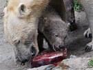 Medvědi si pochutnávají na dortu z ryb, masa, řepy, mrkve a jablek.