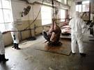 Přísnou kontrolou procházejí i chovy prasat (22. dubna)