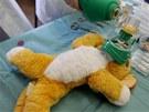 Nemocnice plyšových zvířátek v sále Břetislava Bakaly.