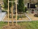 Nové stromky se v Jaroměřicích objevily na hřbitově přímo před hroby některých