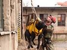 Trénink slaňování záchranářů s jejich psy probíhal v Pardubicích za dohledu