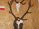Exponáty bludovské výstavy mysliveckých trofejí v roce 2013.
