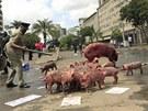 Keňané přivedli před budovu parlamentu prasnici s několik selaty. Protestovali