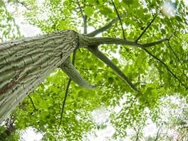 Fascinující pohled do jarní koruny stromu