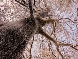 Zimní, ojíněný pohled do koruny stromu