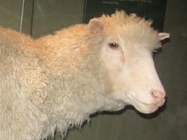 Prvním savcem naklonovaným z dospělé buňky byla ovce Dolly v roce 1996. Na