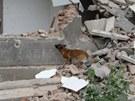 V Ostravě se zřítila část domu, kam zloději chodili krást železo. Sutiny