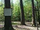 Svatojiřský les na Nymbursku dostal jméno po dávném klášteře svatého Jiří, ve