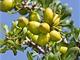 P�ibli�ov�n� olivov�ho oleje ke kategorii pr�miov�ho zbo�� m�e v�st k tomu k tomu, �e z�kazn�ci v �ad� zem� rad�ji zvol� jin� produkt.
