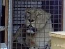 Některá zvířata z Prahy museli chovatelé přestěhovat do jiných zoologických...