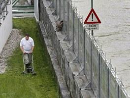 Muž seká trávník za protipovodňovou stěnou v dolnorakouském městečku