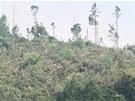 Krnov zakázal vstup do lesů zdevastovaných tornádem. Pohled na polom u místní