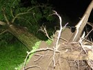 Siln� v�tr v Krnov� trhal st�echy a vyvracel stromy. Meteorologov� budou na