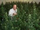 Freerk Bruining z nizozemské firmy Bedrocan, která produkuje marihuanu pro