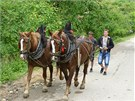 Neprodaní koně se vracejí z trhu.