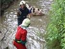 �un�kovi se z vody moc necht�lo, ale nakonec se ho ke b�ehu poda�ilo dot�hnout.