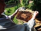 Zatím mají v Horkách dva úly, v létě přibudou další tři. Od září budou včelíny
