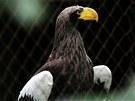 Na voli�ru orl� v brn�nsk� zoo se sesula ��st svahu. Pt�ky museli p�est�hovat