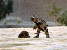 Sebevražedný atentátník se chystal v afhánském Džalalabádu odpálit výbušniny, které si připevnil na tělo. Pyrotechnik je přímo na něm musel zneškodnit (Afghánistán, 30. června 2013).