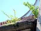 Ze střechy bývalého módního domu Ostravica-Textilia v centru Ostravy vyrůstají