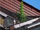 Ze st�echy b�val�ho m�dn�ho domu Ostravica-Textilia v centru Ostravy vyr�staj� n�letov� ke��ky. (2. �ervence 2013)