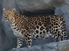 V olomouck� zoo otev�eli nov� pavilon pro levharty mand�usk�.
